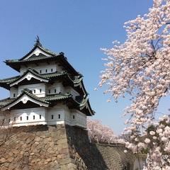 弘前公園外濠の桜の花筏を見に行こう♪お花見蟹「トゲクリガニ」コースを1080円引きで♪