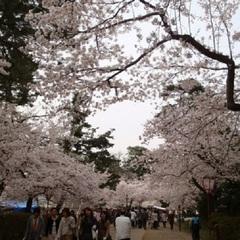 板長おススメ『旬の逸品』青森・花見の季節に春の美味をいただく「トゲクリガニ」プラン