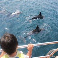 ときめき体験♪イルカに出会える確率は驚きの99%!イルカウォッチング乗船付プラン10月〜