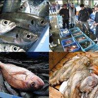 【当日17時まで予約OK】スタンダードコース地魚三昧&ハーフバイキング〜島原半島じげもん食材