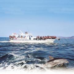 思い出の体験を イルカウォッチング乗船付宿泊プラン イルカに出会える確率は驚きの99%!