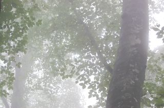 白神山地・癒しの森十二湖で森林浴♪森林セラピー(お気軽/約2.5h)プラン