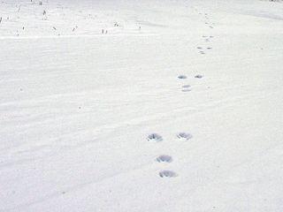 十二湖スノーハイク(約3h)プラン <当プランは「アオーネの湯」の休業期間です>