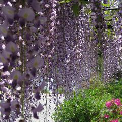 桜・藤・かたくり・・春のお花めぐりプラン♪特典付き