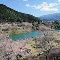 【3月中旬〜4月上旬】市房ダムの周りに約1万本の桜!熊本の誇るお花見スポット☆