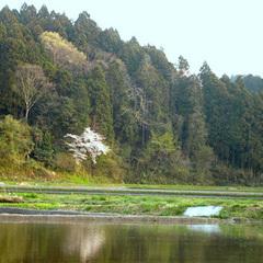 地元米・天然温泉でぽっかぽっかプラン