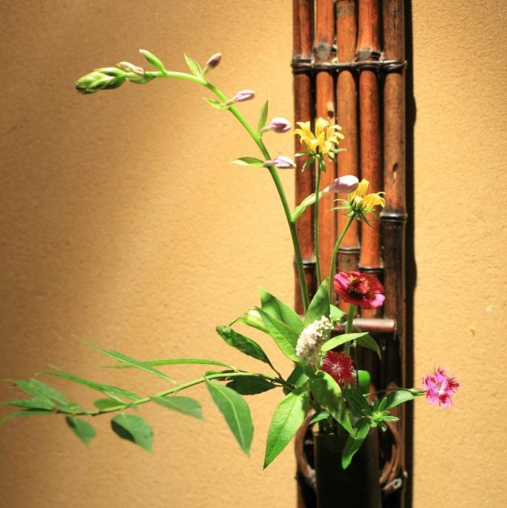 野の花の宿 阿蘇の四季 関連画像 2枚目 楽天トラベル提供