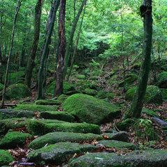 【冬春旅セール】【素泊り】屋久島の大自然を満喫する自由旅♪