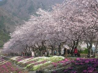 一生の思い出を富士山の景色と★大切な日の記念日プラン