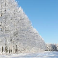 【楽天スーパーSALE】10%OFF<連泊/素泊まり>1日では遊び尽くせない!冬のコテージ滞在体験