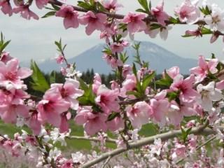【春得】◆春の信州 旬のフルコース満喫 1泊2食プラン◆