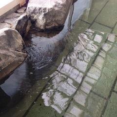 炭酸の泡が噴き出す天然温泉を満喫★地物にこだわる朝食付き☆ぷらん