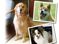 ◆ワンちゃんルーム限定◆ 愛犬と一緒!お部屋でご夕食を楽しめる♪ 【わんわんプラン3月〜5月】