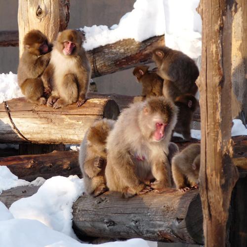 【旭山動物園★入園券付】〜可愛い動物たちに会いに行こう♪〜<朝食付>