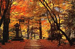 【紅葉】11月の高雄は真っ赤な紅葉と高雄橋はロマンチック
