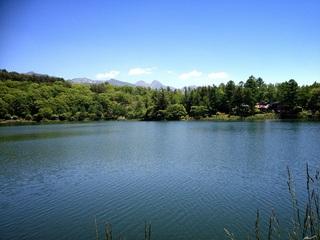 蓼科湖畔 蓼の花