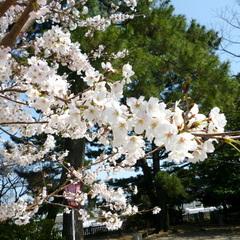【3月&4月限定】☆素泊☆ポイント10倍!春旅応援!タイムセール♪複数名対象