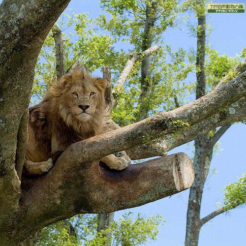 【駐車場&Wi-Fi無料★】 アフリカンサファリプラン☆のびのび暮らす動物にわくわく!朝食付
