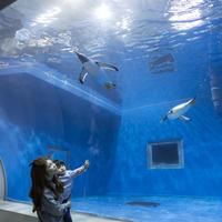 【ゴールデンウィーク】GWは家族でお出かけ!福井の名勝『東尋坊』『越前松島水族館』へのアクセスも◎