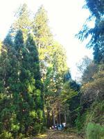 【「花背の三本杉」ガイドツアー】日本一の樹高を誇る奇跡の大杉見学ツアー!