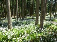 日本有数のシャガの群生地を巡る!1泊3食プラン■山海の幸会席