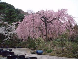 【3連泊以上 素泊まり】京都の数奇屋造りの家の宿。京都駅からバスで約12分 バス停から徒歩3分