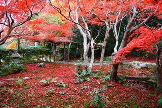 【秋冬の連泊割引・素泊まり(朝食なし)】月が冴え冴えと美しくなる秋、山懐に紅葉燃ゆ、静寂に満ちた冬へ