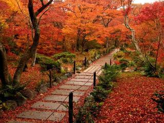 【秋冬の連泊割引・毎朝食付】花鳥風月を感じる秋、凛とした空気感に包まれ、感性を磨く冬