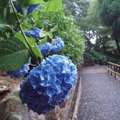 【連泊朝食付プラン】京都の数奇屋造りの家の宿。京都駅からバスで約12分+徒歩3分