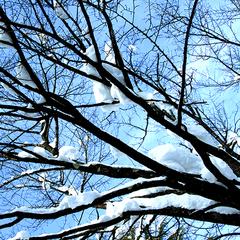 【お先でスノ。】【リフト1日 割引券あり】志賀高原スキー場ゲレンデすぐの宿でスキー満喫-2食付