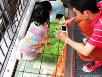 【2017 夏】 東京タワー大展望台チケット付宿泊プラン (朝食付)