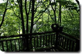 ♪春は新緑で眩しい爽やかな高原へ♪広葉樹の木陰の宿でゆったり♪こだわりの欧風お野彩料理をお腹一杯♪