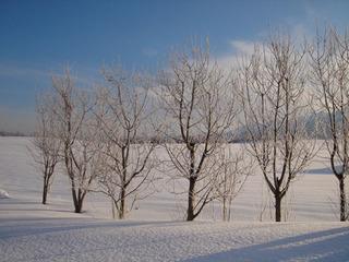 ★1泊朝食付★パウダースノーで遊びまくり!冬のプラン♪【旅して応援!】