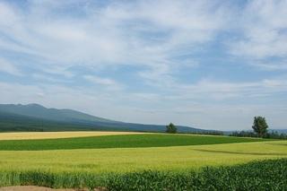 ★1泊朝食付★これぞ北海道!雄大な十勝岳連峰と畑の緑が美しい春から秋のプラン♪【現金決済】