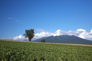 ★1泊2食付★これぞ北海道!雄大な十勝岳連峰と畑の緑が美しい春から秋のプラン♪【現金決済】
