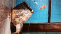 貸切風呂×個室食◆越後もち豚×海の幸も山の幸も味わえるこだわりの和食膳