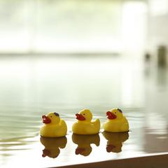 【プール泳ぎ放題】25m×3レーン本格施設!プール営業時間は9時〜18時♪