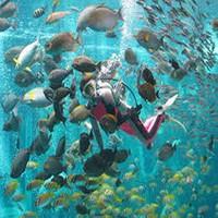 ☆魅力たっぷり♪箱根園水族館で一日満喫!無料入場券付お得プラン☆ご家族、カップル、グループにお薦め!