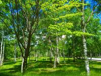 【2021夏プラン】標高1450mはクーラー要らずの涼しさと静かさで癒しの夏休み・高原野菜に温泉に!