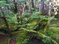 【案内人と歩く苔の森お散歩プラン】北八ヶ岳は苔の宝庫!案内人と歩くひと味違ったプライベートな山歩き!