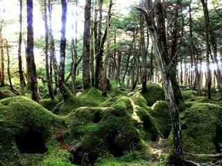 【春・GW・新緑プラン】森の息吹・畑の野菜・高原の目覚めは緑が一番美しく美味しい癒しの季節・温泉も!