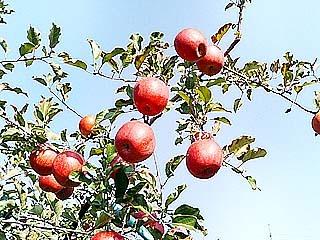 【秋得】りんご狩りと夕朝2食付プラン♪