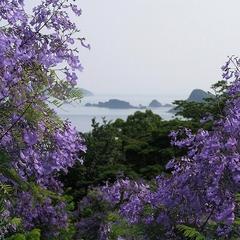 ホテル支配人がご案内♪世界三大花木の一つ『ジャカランダ』の森を楽しむ★夕朝食付き