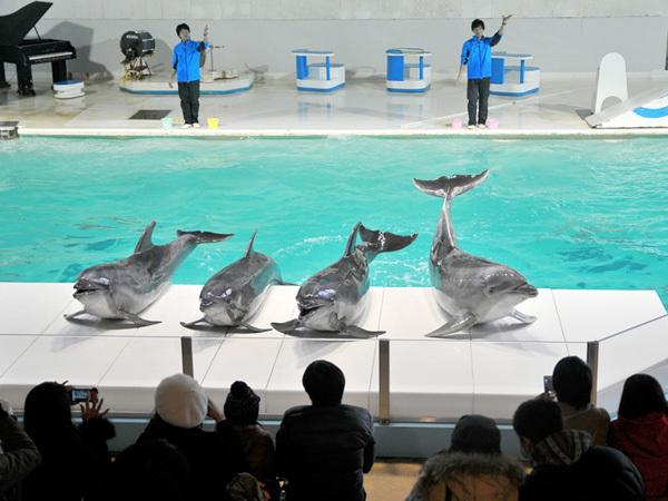 小樽水族館☆入場チケット付ファミリープラン