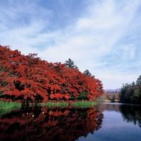 【ゆったり過ごす軽井沢の朝 1泊朝食プラン】 四季折々 景色を愉しみながらのんびり朝食を