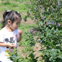 能登の青い宝石★たわわに実った完熟果実に大喜び!《ブルーベリー摘み取り体験プラン》で夏の想い出旅行♪