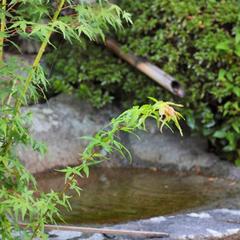 【近江牛すき焼き】A4〜A5ランク最高級★当館自慢の信楽の隠れた伝統料理!