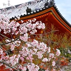 【春グルメ】◆京料理×旬のたけのこ◆春の訪れを喜び、そして味わう。京都の≪たけのこ≫を堪能する。