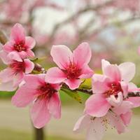 3・4・5月限定《春のお出かけ応援プラン》貸切風呂1回無料&飲み放題付&選べる信州のお土産付