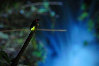 幻想的な光に包まれて♪辰野町蛍観賞へGOプラン!ご夕食17:00〜OK!